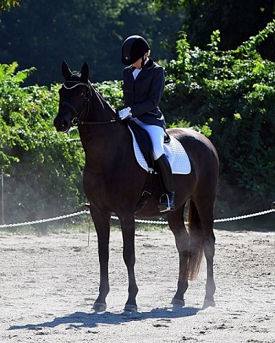 Picture of Suzanne competing w/her horse, Panax.